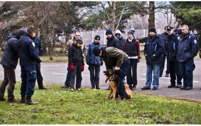 görev köpekleri, k9, güvenlik